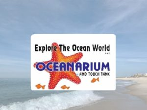 oceanarium-touch-tank-luna-blu
